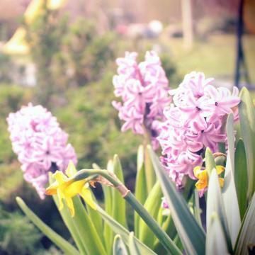 Die Gartensaison kommt