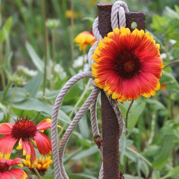 Zwischen Sommer und Herbst - September im Garten