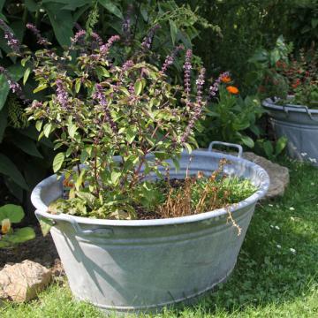 Nachhaltigkeit: Bio im Garten