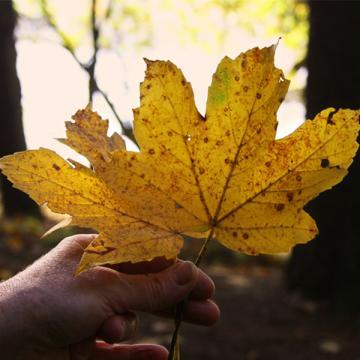 Herbstliche Spiele im Wald