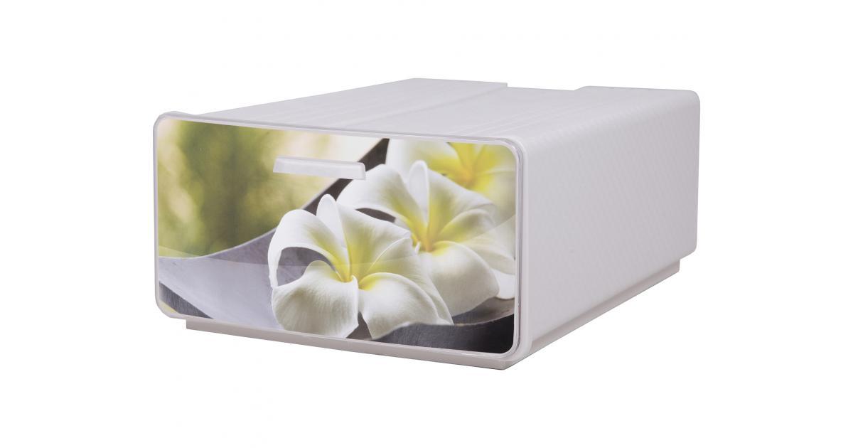 ondis24 boxy orchideen g nstig online kaufen. Black Bedroom Furniture Sets. Home Design Ideas