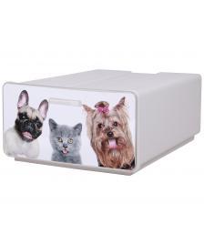 ONDIS24 Boxy Hund und Katze